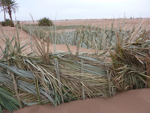 Photo: Traditionele manier van hagen maken tegen verwoestijning