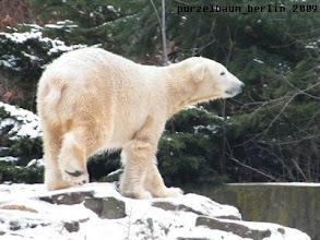 Photo: Knut inspiziert seine Anlage ;-)
