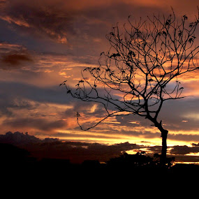 by Gilang Ariefian Gutama - Landscapes Sunsets & Sunrises ( orange, tree, sunset, dark )