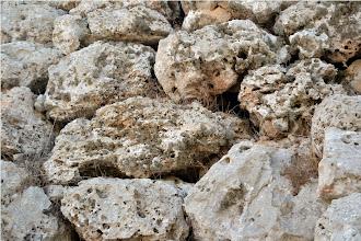 Photo: Roccella sobre les pedres dels talaiots
