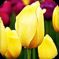 Tulips Live Wallpaper (Wallpapers & Backgrounds) APK