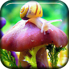 Nature. Snail And Mushroom LWP icon