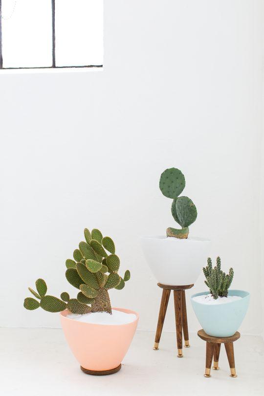 plantas chiques