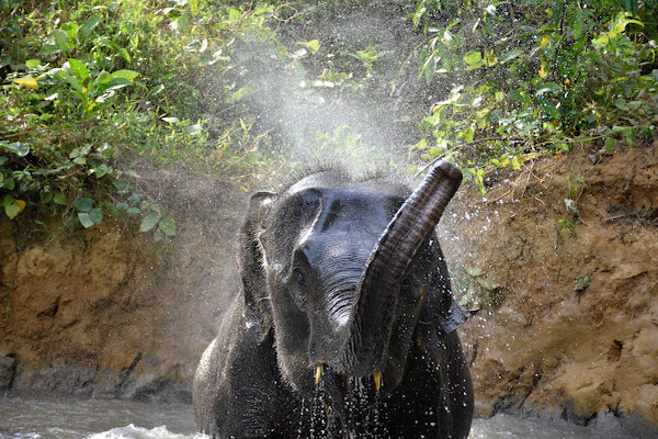Watch the baby elephant playing in the river