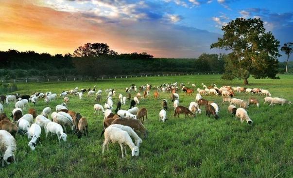 UK Farm