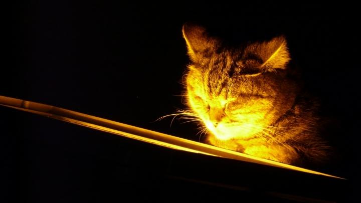 Luce che riscalda!! di Fridasau
