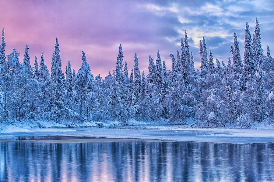 Lapland by Jari Johnsson - Landscapes Forests