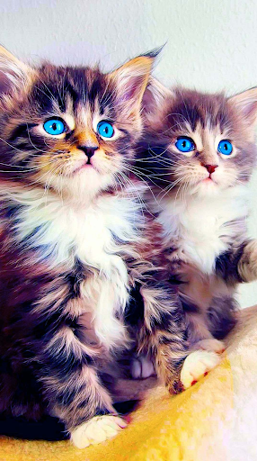 Download Cat Wallpapers And Background Free For Android Cat Wallpapers And Background Apk Download Steprimo Com