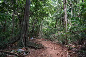 "Photo: road to ""Ông Đụng"" beach, the forest here has quite a lot of birds, who sing all the time, but can hardly see them..."