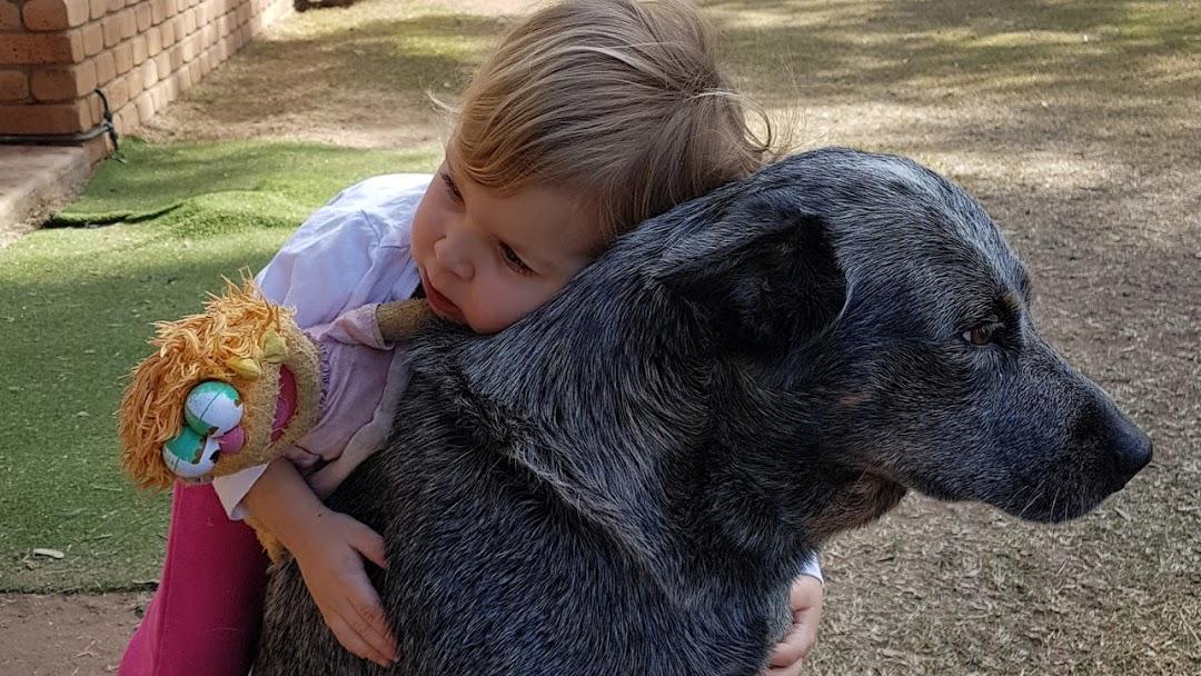 Simons' Australian Cattle Dogs - Dog Breeder in Swan Creek