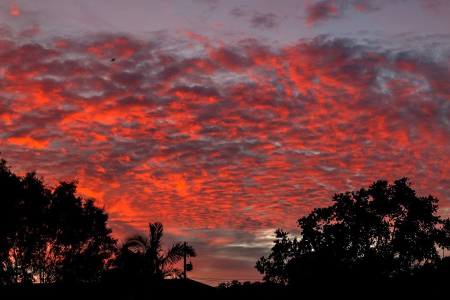 The sky this morning at 6.30am. It was only there for a couple of minutes. by Cora Lea - Landscapes Cloud Formations (  )