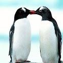 penguin-Tel icon