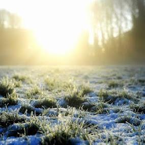 Winter Sunlight by Sam Kirimli - Digital Art Places