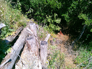 Photo: The bank to the creek is very steep. This native shoring is creative engineering.