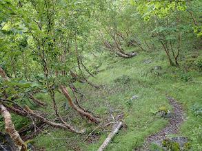 灌木帯となる
