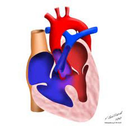 【免費醫療App】Cardiology rotation Max Notes-APP點子
