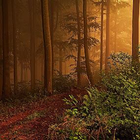 Mlha v lese by Jana Černošková - Landscapes Forests ( fog, forest,  )