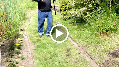 Video: Phillip catching Bullfrogs