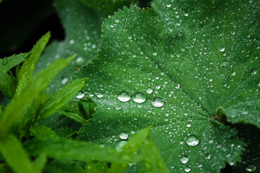 Water Droplets by Tracey Dolan - Nature Up Close Leaves & Grasses