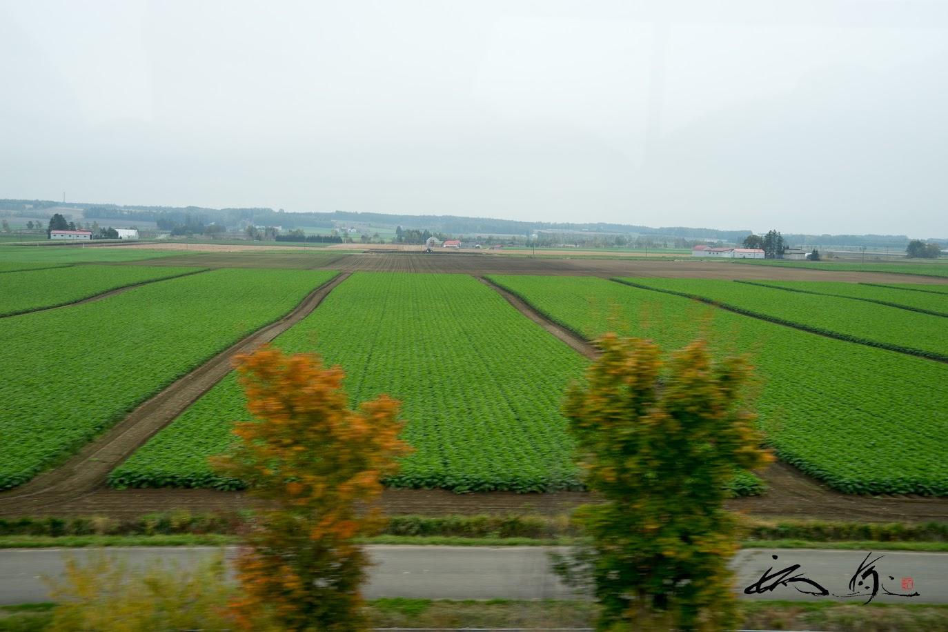 車窓から眺める広大な畑の風景