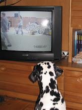 Photo: Ein Lehrfilm - Wolfshagen, ich war auch dabei (Puppy)