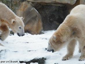 Photo: Knut hat noch nicht genug - und Gianna ?
