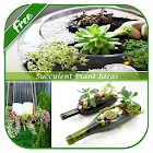 Succulent Plant Ideas icon