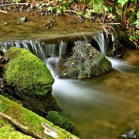 Horský potok by Ján Hrmo - Nature Up Close Other Natural Objects ( potok, trava, konáriky, mach, skaly, drevo, voda )
