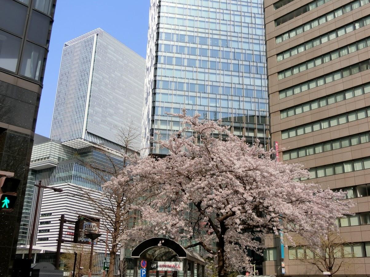 名古屋駅高層ビル群と桜