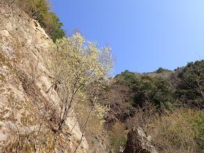 林道横は急斜面