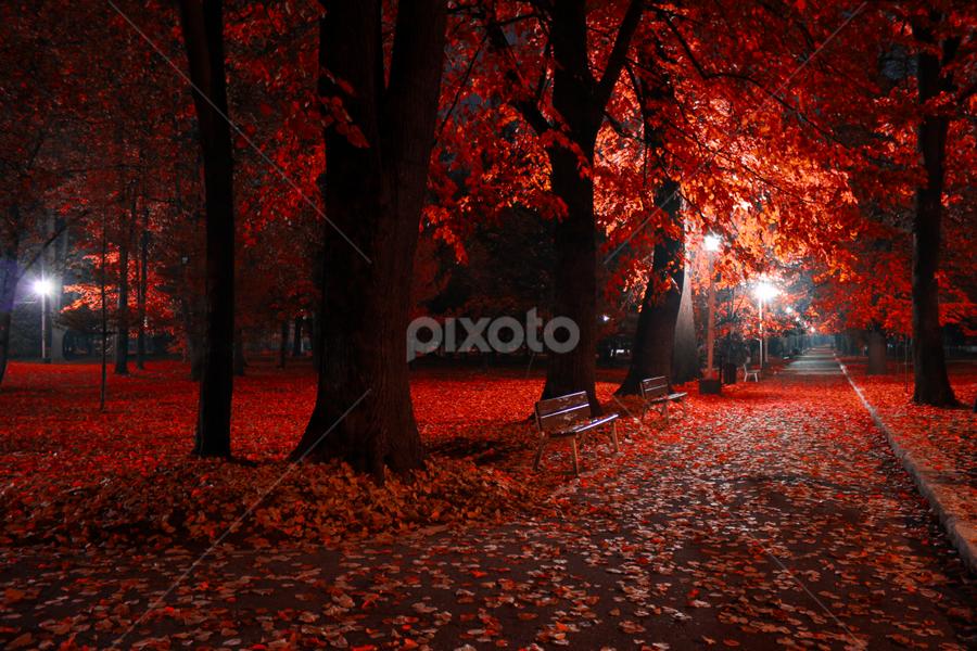by Radu Cretu - City,  Street & Park  City Parks ( lights, nighttime in the city, park, 2013, moods, zavoi, 2014, park at night, romania, circle, landscape, photo, photography, valcea, city,  )