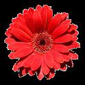 Open Flora Helvetica icon