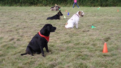 Photo: Distance Control competition... Dicer in the forefront came 2nd, only beaten by Stanley German Shepherd by a technicality. They had gone past the 20 meter line in their last round...