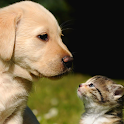 cat and dog wallpapers icon