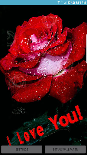 Rose Wallpaper 2018 Red Rose Live Wallpaper Hd Apk Download