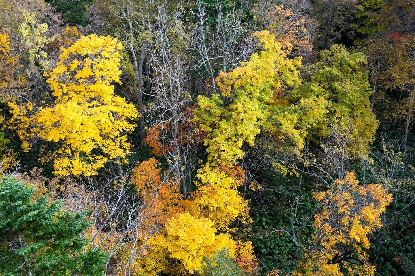 錦織り成す秋の風景
