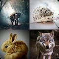 Animals Quiz - Learn animals