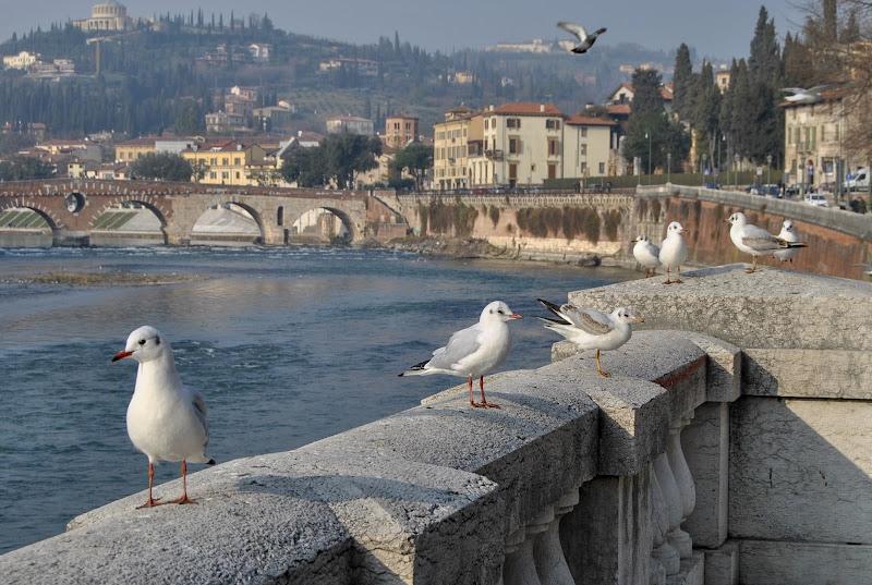 Ponte Pietra, Verona di gitsela