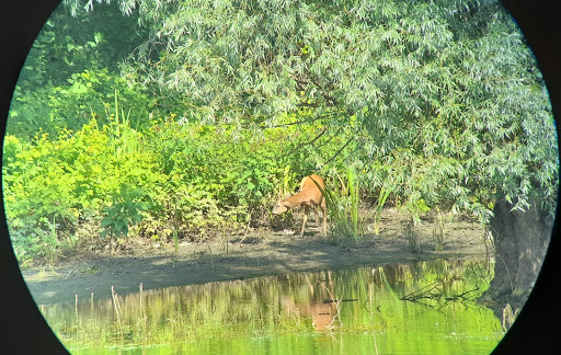Beljarica Backwaters: Some good news announced (but not yet official)