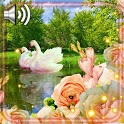 Swan and Rose Live Wallpaper icon