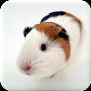 Guinea Pig Manual