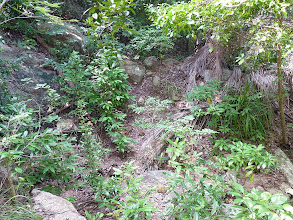 Photo: Ko Phangan - trek from Haad Khom to Haad Khuat, yes there in the middle is trail and this is very good and easy part of trail