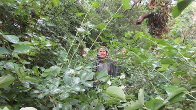 Photo: Végétation tellement dense que l'on n'aperçoit ni ses pieds, ni les embûches