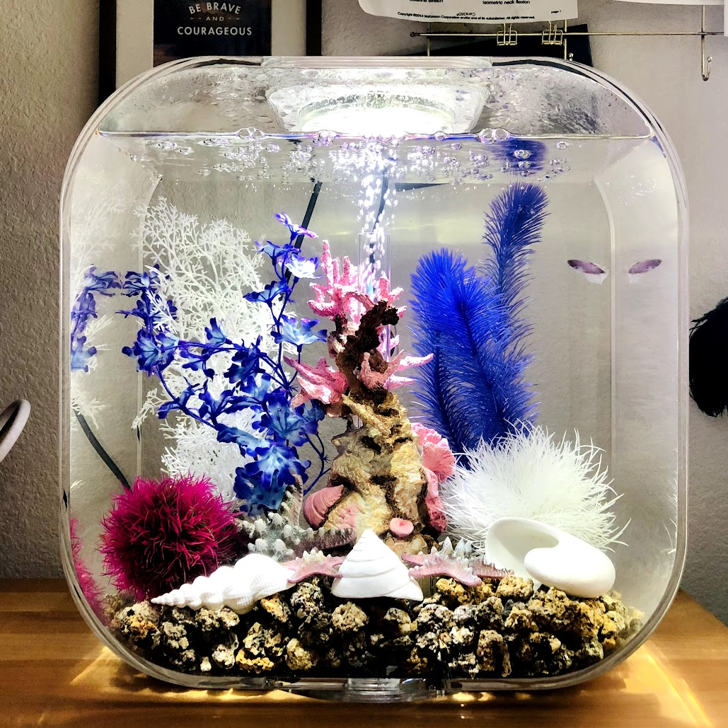 My Biorb Aquarium Setup & Supplies