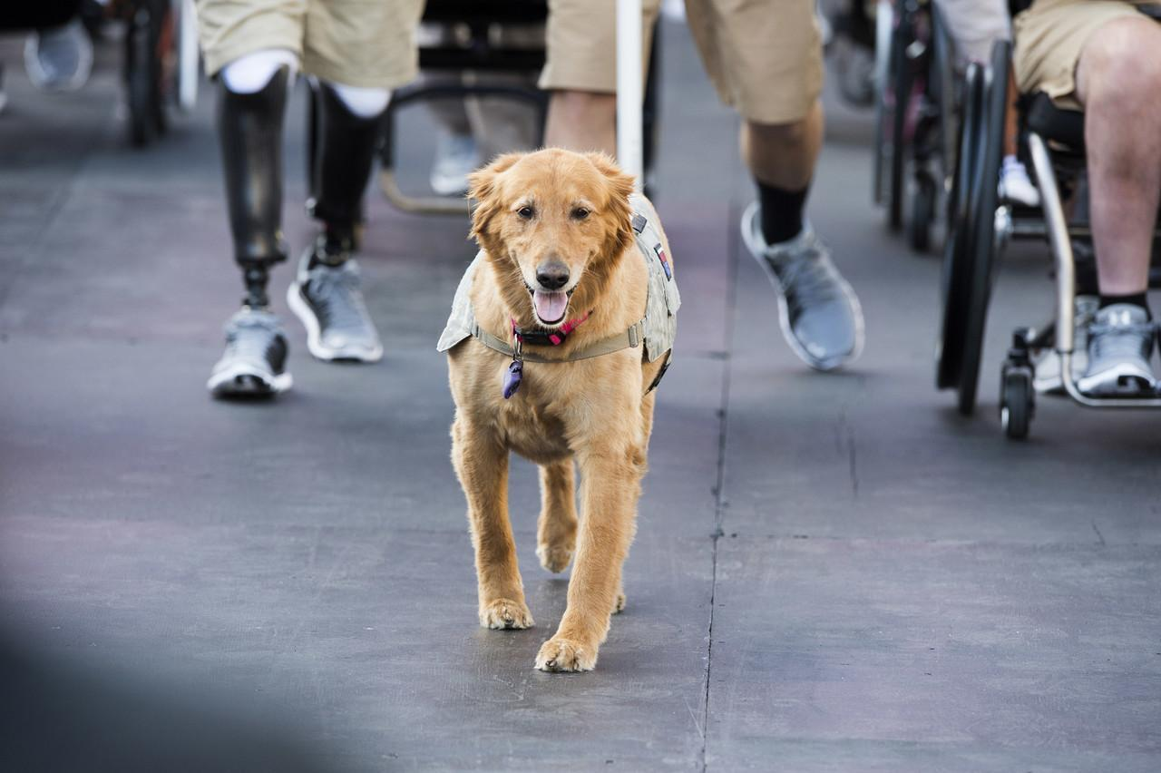 How do service animals help veterans?