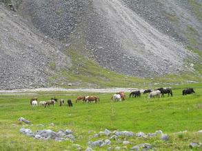 Photo: После спуска с перевала Хубыты (пастбище в верховьях Баром-Гола)