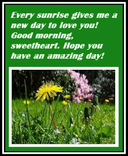 Nature Morning Cards