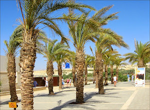 Photo: Здесь была цивилизация, росли шикарные пальмы и была переодевалка для купания. Именно переодевалка, потому что...
