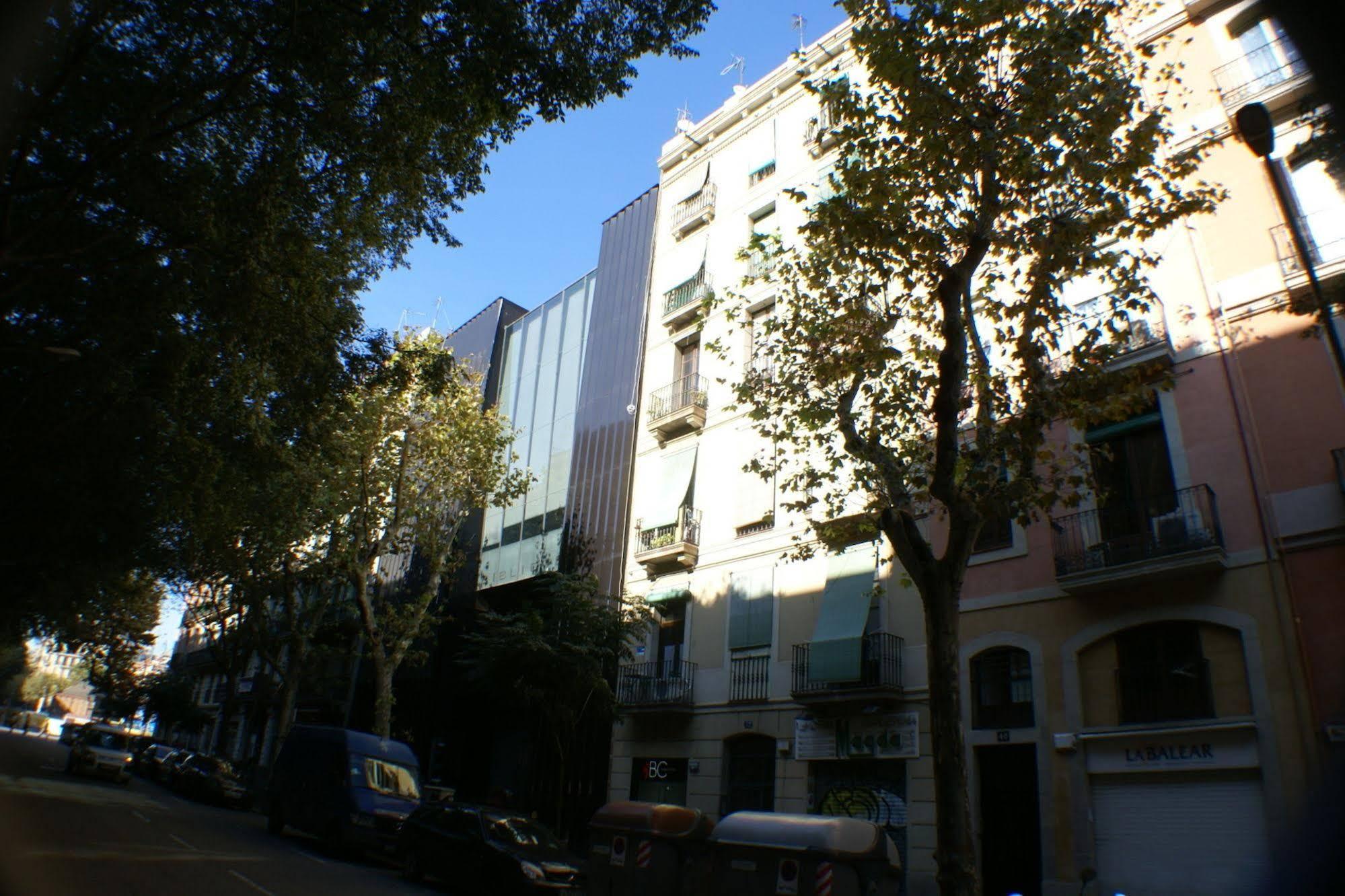 Flateli Borrell