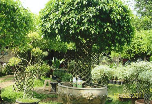 Jenis Pohon Penghias Halaman